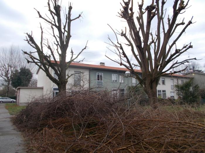 alberifusignano3