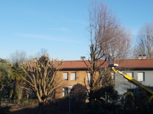 alberifusignano6