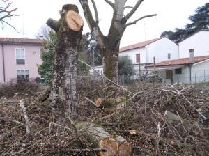 alberifusignano2